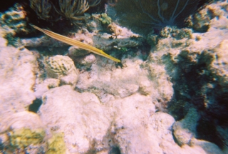 Snorkeling in Key Largo