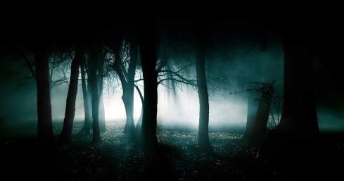 A dark forest at night, misty and beautiful