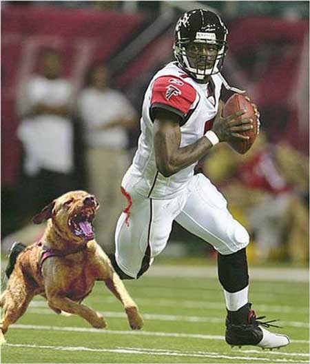 Michael Vick being chased by a dog