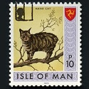 Isle of Man Manx cat