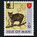 Isle of Man Manx cat