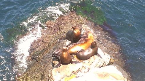 La Jolla Cave Seals